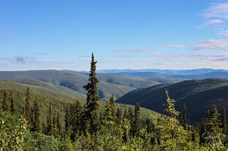 Yukon 381