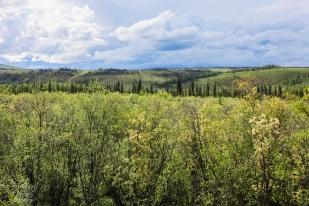 Yukon 422